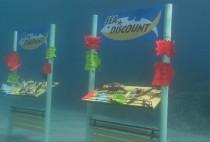 sea-discount